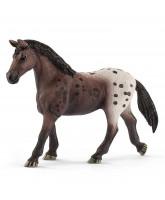 Appaloosa hest - hoppe