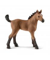 Quarter hest - føl