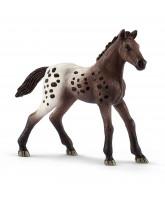 Appaloosa hest - føl
