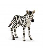Zebra - føl