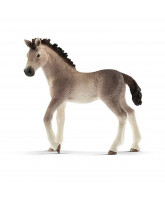 Andalusian hest - føl