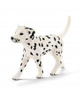 Dalmatiner - han