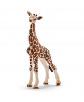 Giraf unge