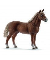 Morgan hest - hingst