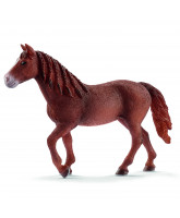Morgan hest - hoppe