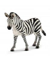 Zebra - hun