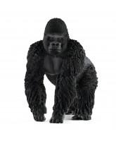Gorilla - han