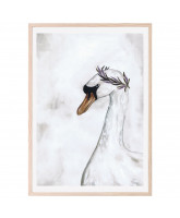 Proud swan plakat 50x70 cm