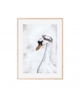 Proud swan plakat 30x40 cm