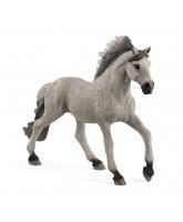 Sorraia Mustang-hingst